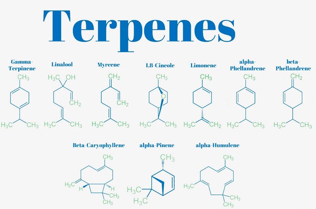 list of terpenes