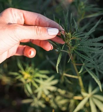 Growing weed outdoors