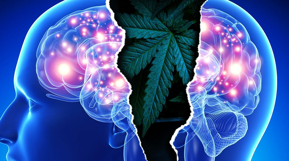 can edibles cause hallucinations