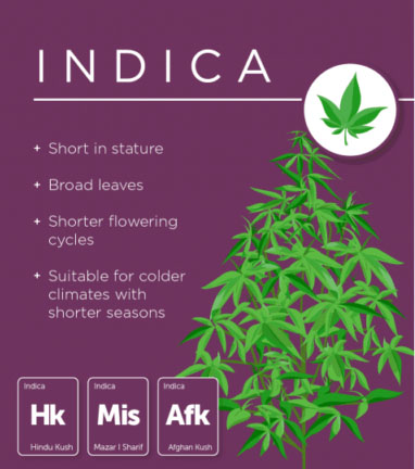 Different kinds of weed