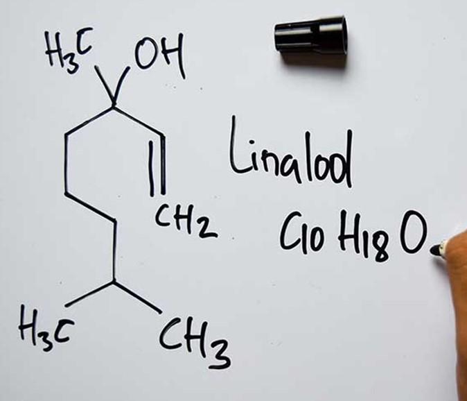 Linalool terpene