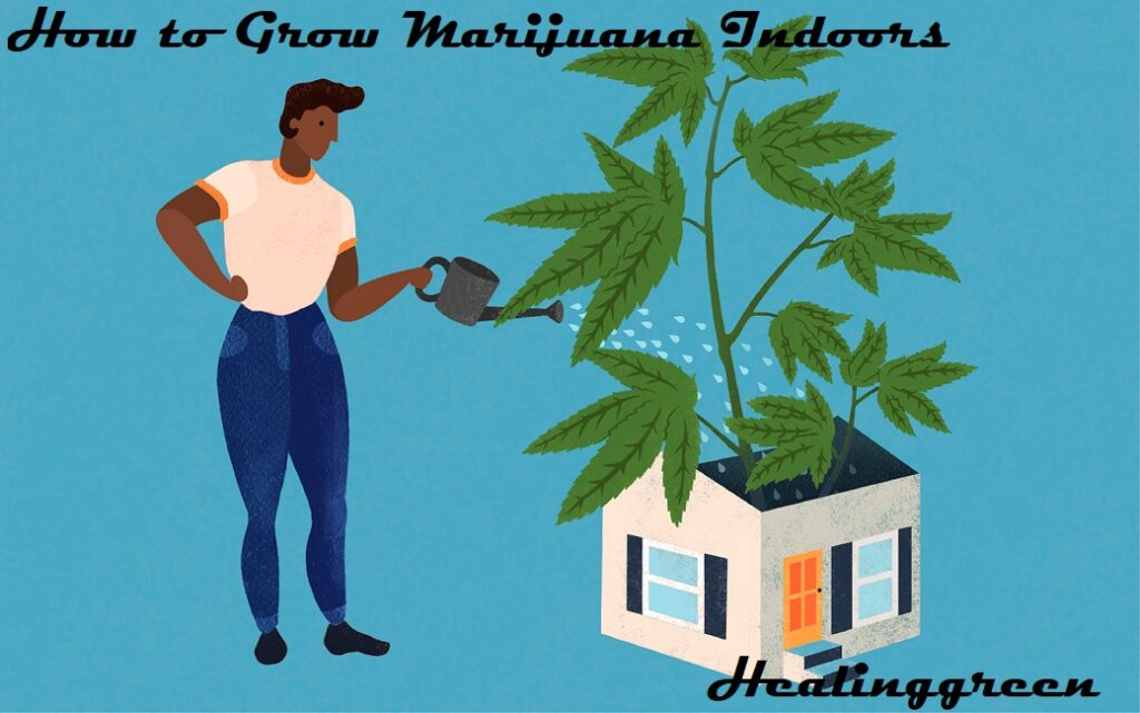 how to take care of a weed plant at home