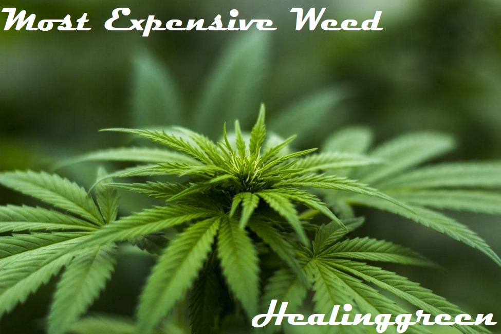 most expensive weed
