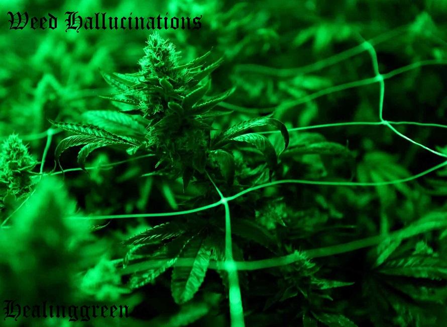 weed hallucinations