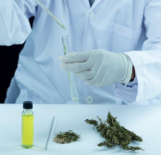 THCV: The Mystery Cannabinoid