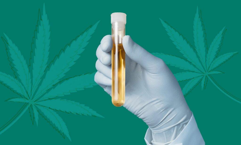 Weed drug test
